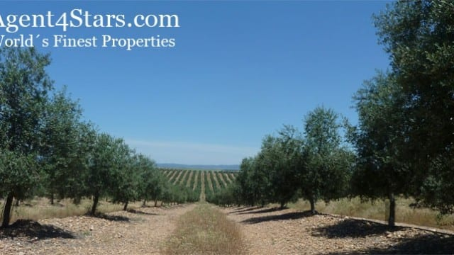 325 hec. -84000 olive trees